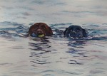 Lab Retrievers 2015 by Susan Piesse
