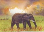 Elephant at sunset 2014 by Susan Piesse